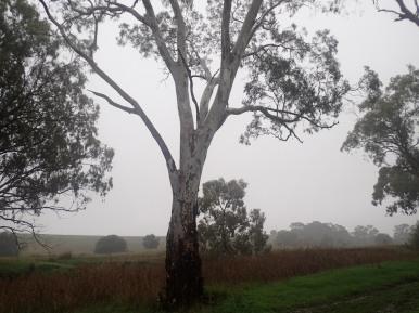 Rain at camp.